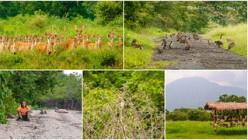 Highlights: Baluran National Park — Bekol Savannah, Bama Beach & Wildlife Encounters