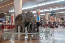 Delhi International Airport, New Delhi, India